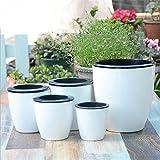 Labu Store Automatic water-absorbing Flower Pots Bonsai Creative Multi-meat Plant Hydroponic Potted Large Plastic Flower Pots