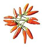 Burpee Tabasco Hot Pepper Seeds 30 seeds