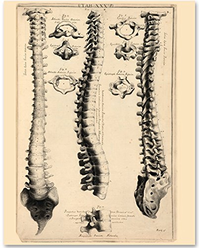 Spinal Column - 11x14 Unframed Art Print -