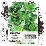 Seed Needs, Italian Oregano Herb (origanum vulgare) 1,000 Seeds Non-GMO