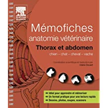 Mémofiches anatomie vétérinaire - Thorax et abdomen