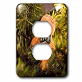 3dRose Danita Delimont - Holidays - USA, Maryland, Bethesda, Gingerbread Man ornament. - Light Switch Covers - 2 plug outlet cover (lsp_279028_6)