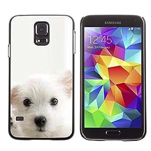TECHCASE**Cubierta de la caja de protección la piel dura para el ** Samsung Galaxy S5 SM-G900 ** Cub Puppy White Mutt Pet Muzzle Cute Dog