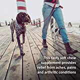 Veterinary Formula Clinical Care - No Harsh Ingredients - Premium Quality Dog Supplement