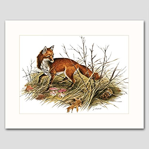 Red Fox Art w/Mat (Woodland Animal Artwork, Home Wall Decor)