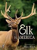 Elk in America