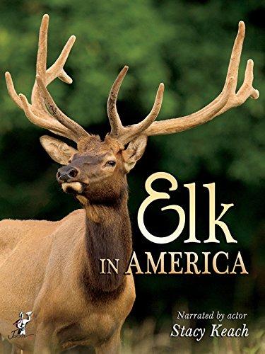 Elk in America ()