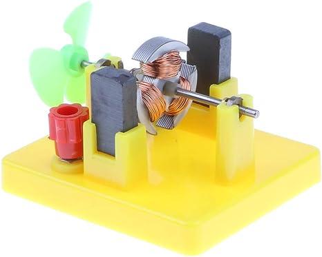 SGerste - Mini Modelo de Motor para niños con Ventilador, Juguete de física, experimentos eléctricos, Juguetes educativos, Suministros Escolares para Estudiantes: Amazon.es: Deportes y aire libre