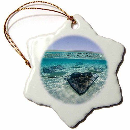 3dRose orn_73261_1 Cayman Islands, Southern Stingray in Caribbean Sea-CA42 PSO0044-Paul Souders-Snowflake Ornament, Porcelain, (Cayman Islands Wedding)