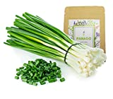 1300+ Long Green Scallion Seeds for Planting, Non-GMO Organic Heirloom Scallion Seeds