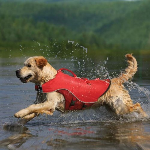 Kurgo Surf n' Turf Dog Lifejacket and Coat, Medium, Red, My Pet Supplies