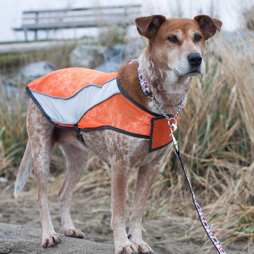 Picture of Canine Friendly High Visibility Dog Vest, X-Large