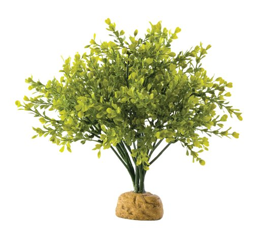 Exo Terra Boxwood Bush Terrarium Plant