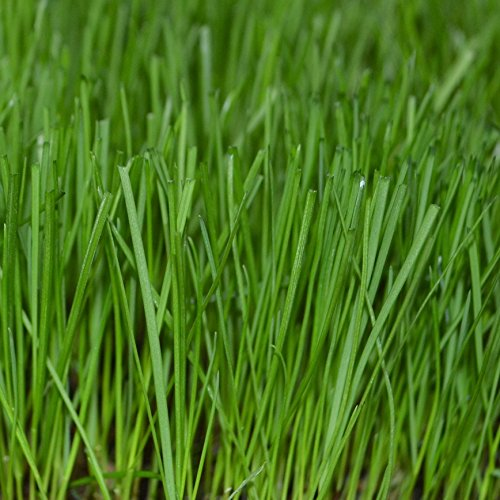 GreenView Fairway Formula Grass Seed Perennial Ryegrass ...
