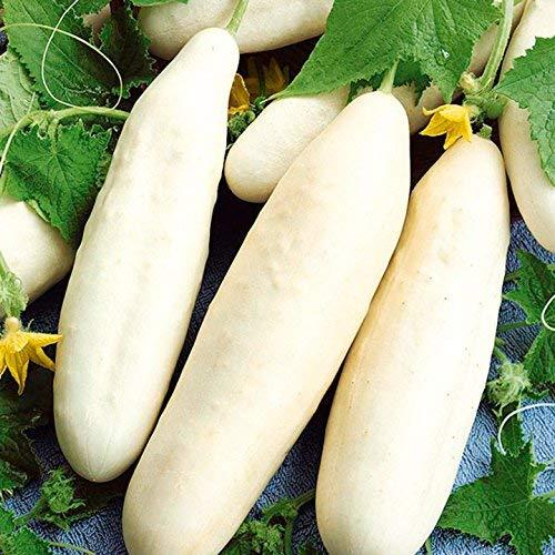 Ivory White Wonder Cucumber Seeds - 100+ Premium Heirloom Seeds,(Isla's Garden Seeds),Non Gmo, 90% Germination Rate, Highest Quality!