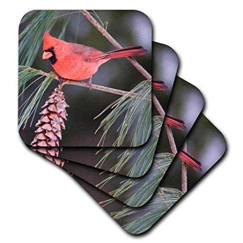 3dRose Northern Cardinal Male in White Pine Tree, Marion, Illinois, USA. - Ceramic Tile Coasters, Set of 4 (CST_207583_3)