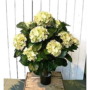 Planta artificial Hydrangea macrophylla, XXL y hortensias, blanco, altitud thyrses 9, 62 cm