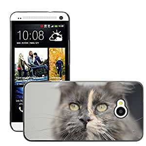 Hot Style Cell Phone PC Hard Case Cover // M00111044 Cat Animal Cat'S Eyes Domestic Cat // HTC One M7