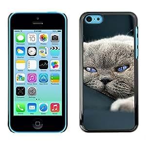 New Fashion Case BLOKK case cover / Apple iphone 4s / cute sleepy cat zHbC6nArAG7 house British shorthair / Slim Black Plastic case cover case cover Armor