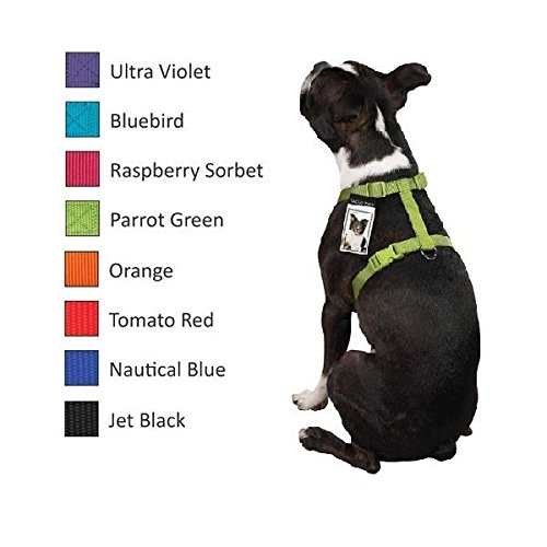 Dog Harness Bulk Pack Shelter Vet Rescue Assorted Color Choose Size & Quantity (Small 8'' - 14'' 10 Harnesses) by Zack & Zoey