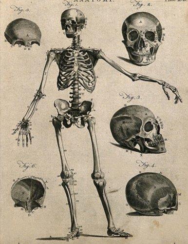 140 Matte - Antique Anatomical Skeleton Graph Paper Sketchbook:: 8.5x11 inch 140 pages matte finish soft cover