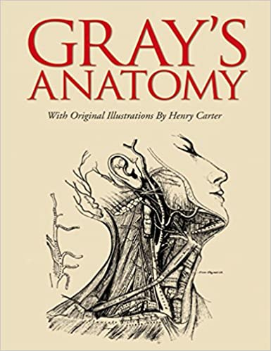 Textbook greys pdf anatomy
