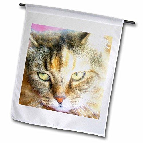 3dRose fl_111083_1 Beautiful Maine Coon Cat Closeup Garden Flag, 12 by 18-Inch