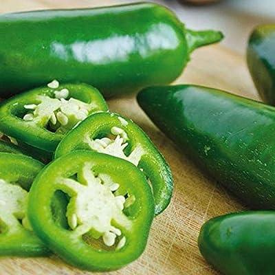 Jalapeno Goliath Hybrid Pepper Seeds (10 Seeds) : Garden & Outdoor