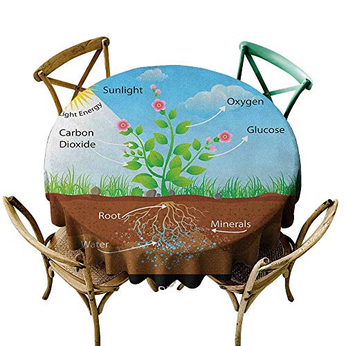 StarsART Round Table Cloth Educational,Photosynthesis in Plant Diagram Biology Botany Agriculture Environment Foliage, Multicolor D54,Round Tablecloth (Graphic Symbols For Electrical And Electronics Diagrams)