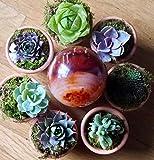 20 Plants of Mini Succulent Planted Pots