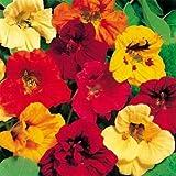 Outsidepride Nasturtium Seed Mix - 1/4 LB
