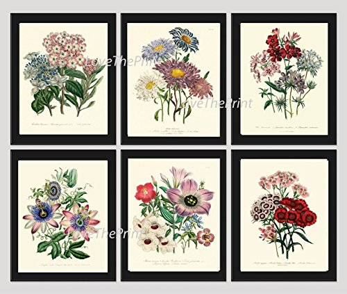 Botanical Set of 6 Prints Unframed Antique Beautiful Red White Blue Flowers Wildflowers