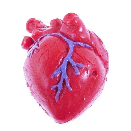 Splatter Heart - Tedcotoys School Children Activity Organ Splatter- Heart