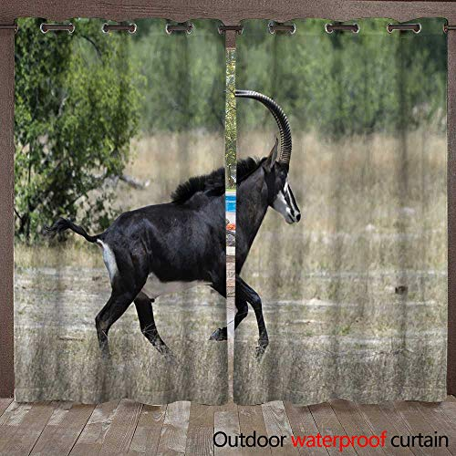 (WinfreyDecor Outdoor Curtain for Patio Male Sable Antelope Pacing Right in Hwange National Park Zimbabwe W72 x L84)