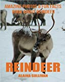 Reindeer: Amazing Photos & Fun Facts Book about Reindeer
