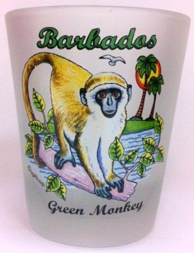 Barbados Green Monkey Shot ()