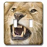 3dRose lsp_73093_2 Africa, Kenya, Masai Mara, Male Lion Bearing Teeth.-Af21 Dsr0007 Daniel Schreiber Double Toggle Switch