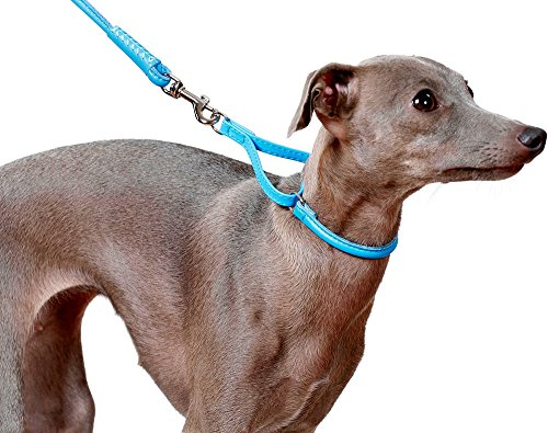 Pictures of CollarDirect Rolled Martingale Dog Collar Training Genuine 3