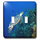 3dRose LSP_74847_2 Cayman Islands, Hawksbill Sea Turtle and Coral Reef Double Toggle Switch