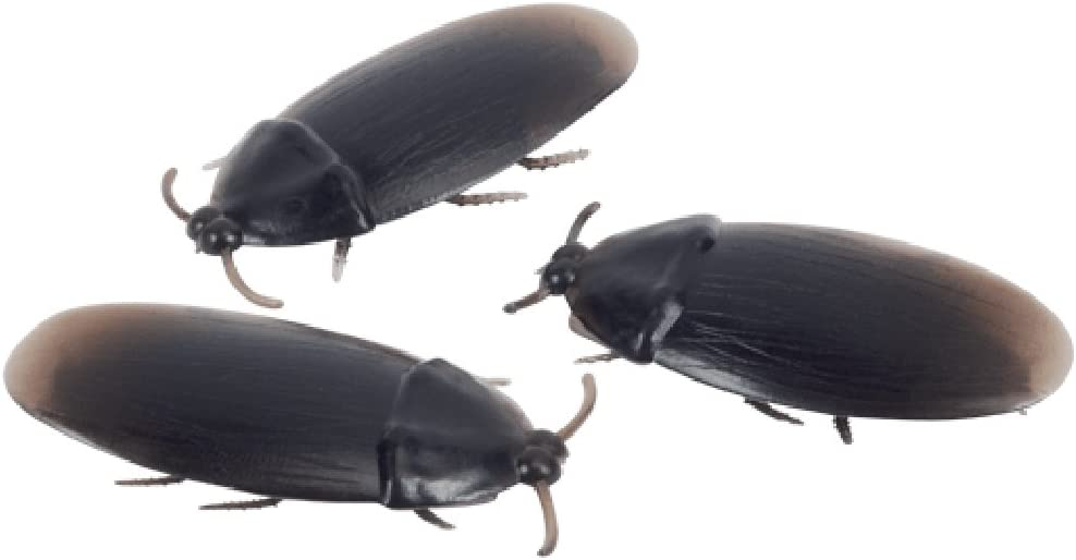 Loftus 12- Fake Roaches Prank Novelty Cockroach