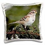 3D Rose American Tree Sparrow Spizella Arborea Bird Photo Animal Photography Design Pillowcase, 16'' x 16''
