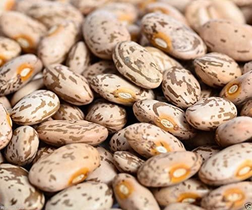 Amazon Com 1 4 Lb Pinto Beans Seeds Most Common Bean In The Us Bean Seeds Pole Heirloom Garden Outdoor