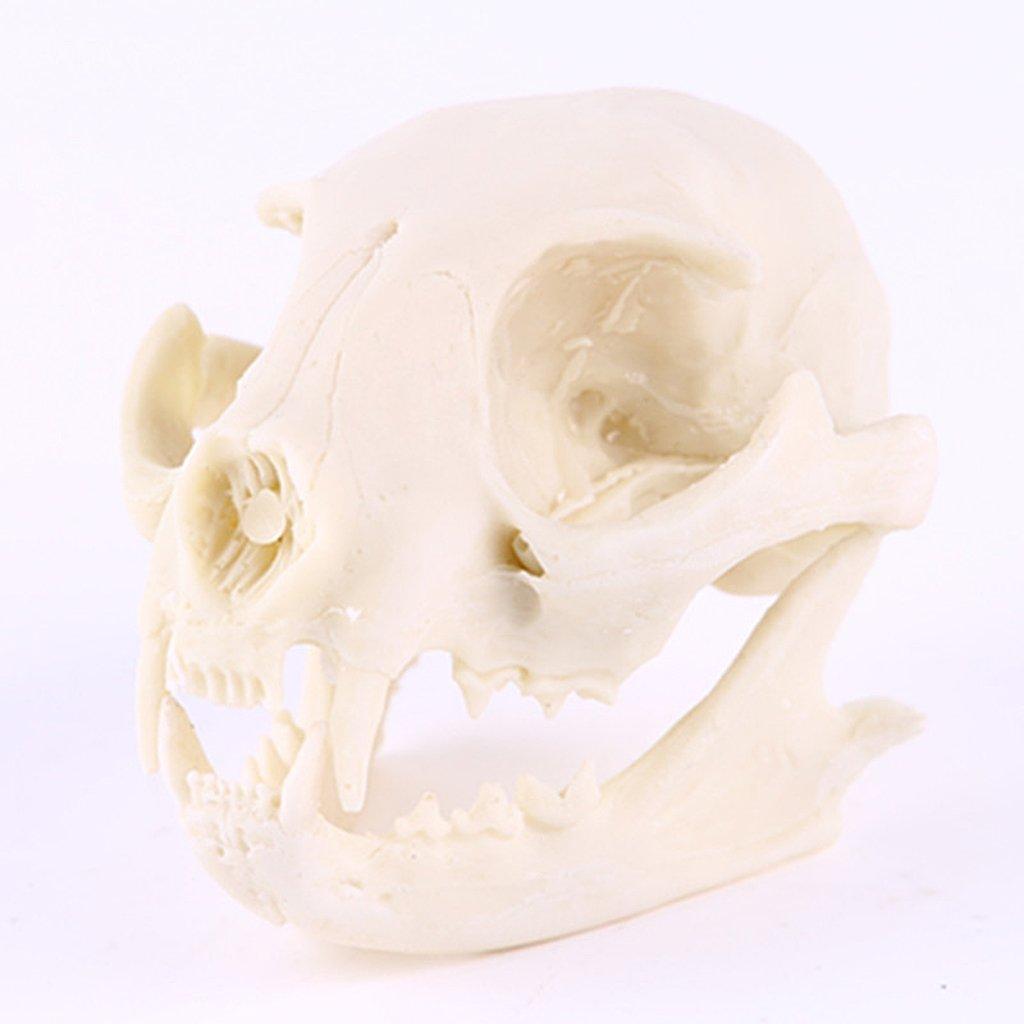 Mod/èle Cr/âne de Chat en R/ésine Squelette Enseignement Aquarium D/écoration