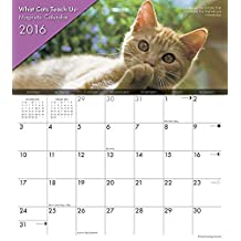 What Cats Teach Us 2016 Magnetic Calendar