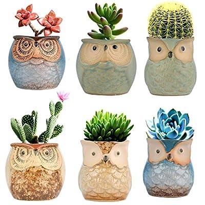 Betrome Owl Pot 2.5 Inch, Ceramic Flowing Glaze Succulent Pots, Owl Planter, Mini Ceramic Pots, Bonsai Owl Pot with a Hole for Small Flower, Plant & Cactus, 6 Pcs: Garden & Outdoor