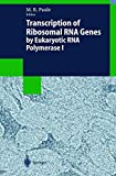 Transcription of Ribosomal RNA Genes by Eukaryotic RNA Polymerase I (Biotechnology Intelligence Unit)