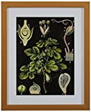 "Green Botanical Anatomy in Gold Frame, 13"" x 15"""