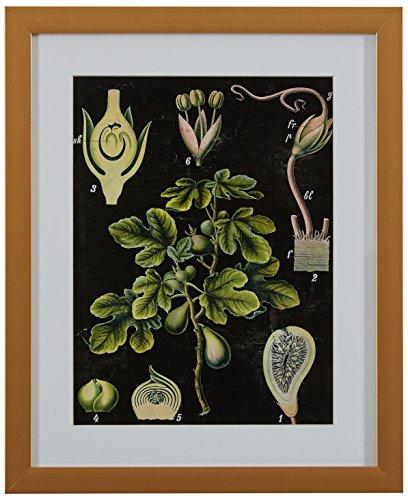 Rivet Green Botanical Anatomy in Gold Frame - Steampunk Wall Decor