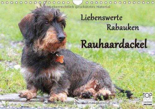 Liebenswerte Rabauken Rauhaardackel (Wandkalender 2014 DIN A4 quer): Rauhaardackel sind einfach liebenswerte Rabauken (Monatskalender, 14 Seiten)