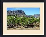 Framed Print of Vineyards of Franschoek, Cape winelands, Western Cape, South Africa, Africa